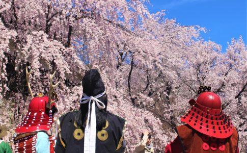 上田城の千本桜まつり